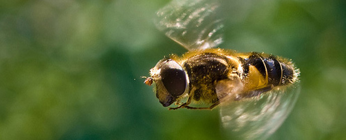 Bee Banner2