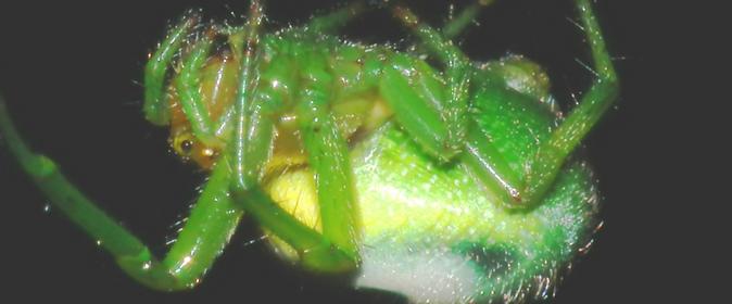 Green monstor 674 x 280 (CharlesLam)