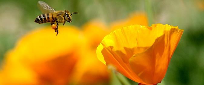Danny Perez Photography via Flickr 674 x 280