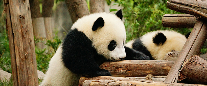 (Pandas) Andrew and Annemarie via Flickr 674